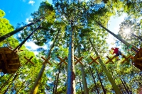 Forest Adventure Misato