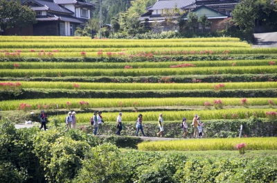 Terraced Rice Fields in Shiraishino